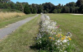Anpflanzung von Bienenweiden
