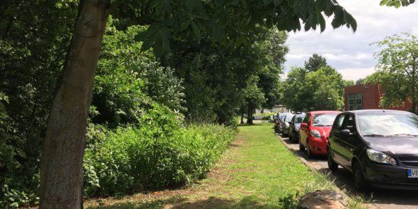 Ebereschen entlang des Parkstreifens an der Max-Eyth-Schule