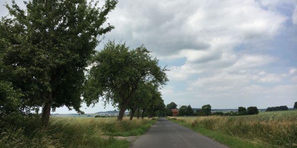Obstbäume entlang des Reibertenroder Weges