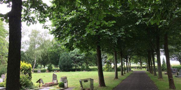 Schmuckbäume auf dem Alsfelder Friedhof